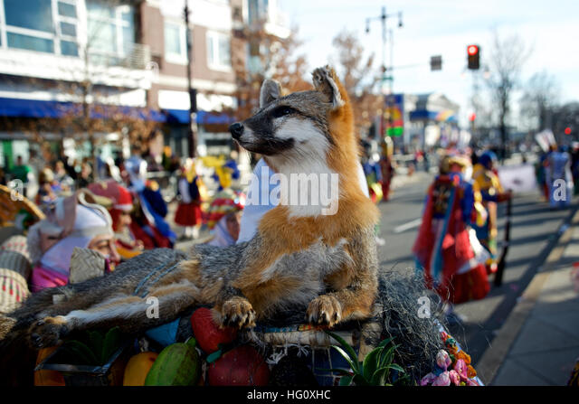 Philadelphia, United States. 01st Jan, 2017. Mummers strut during the 117th annual New Year's Day Mummers Parade, - Stock Image