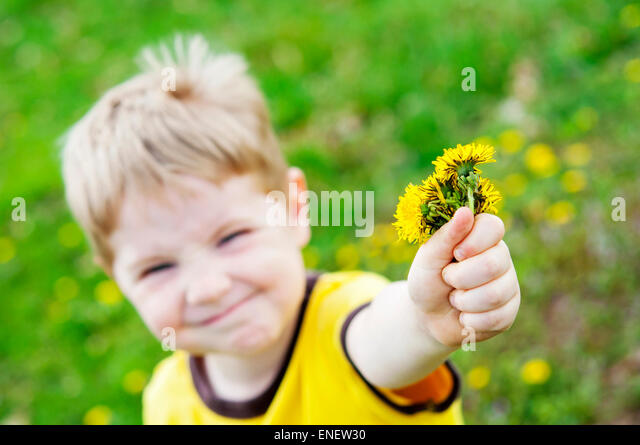 boy giving gift of dandelion flowers - Stock Image
