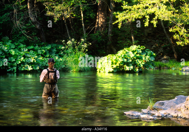 Blue ribbon trout stream stock photos blue ribbon trout for Trout fishing northern california