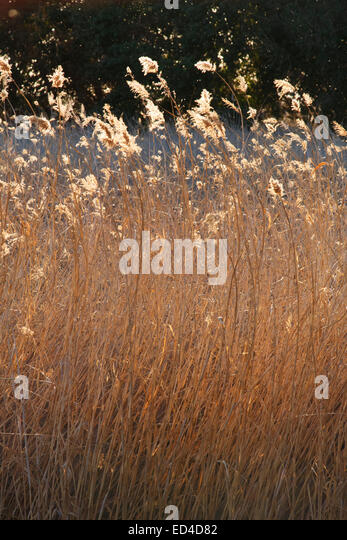 Clark County Wetlands Park Nature Preserve and Nature Center near Las Vegas, Nevada. - Stock Image
