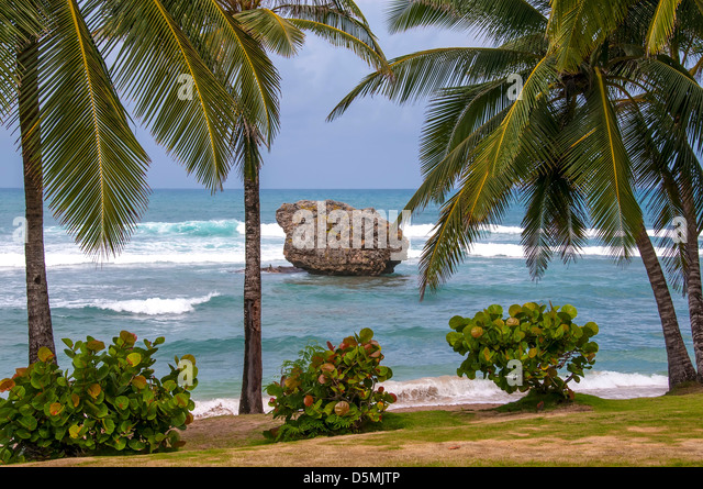 Iconic limestone boulder rock at Bathsheba Village Cattlewash Beach, Barbados rock formations - Stock Image