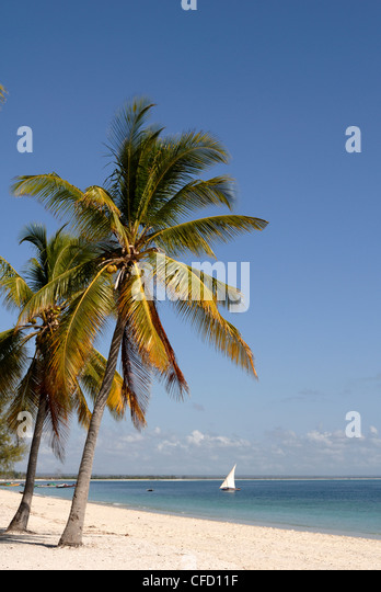 Coconut palm and dhow, Pangane beach, Mozambique, Africa - Stock Image
