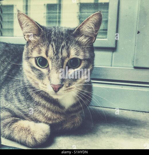 The cat in the house - Stock Image
