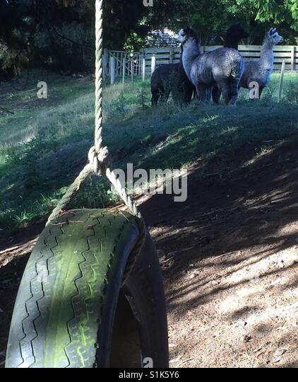 Tyre swing - Stock Image