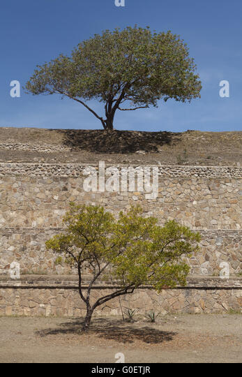 Trees on the Palenque Mayan ruins, Chiapas, Mexico - Stock-Bilder