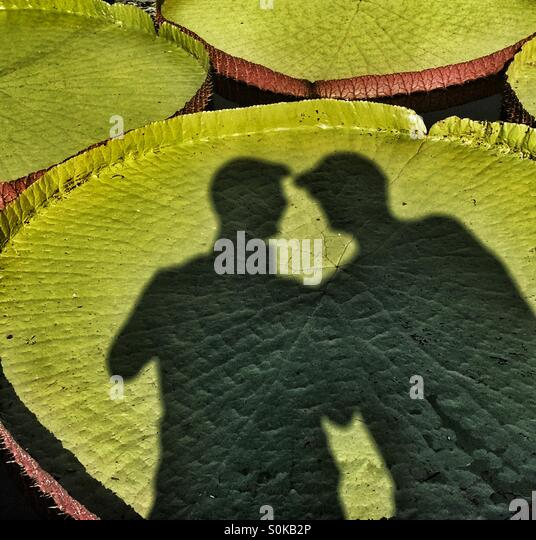 Lily pad boys - Stock Image