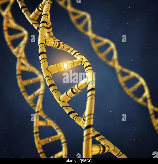 Genetically modified DNA molecules , GMO , Genetic engineering - Stock Image