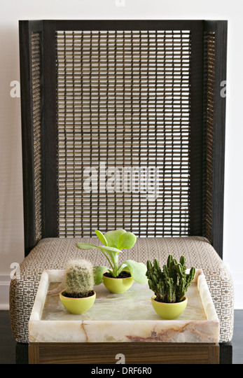 Maryland USA 3 succulent cactus houseplants by bamboo screen - Stock Image