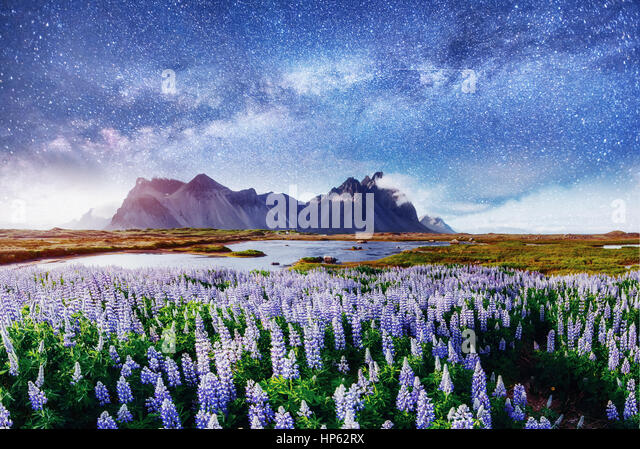 The picturesque landscapes of forests and mountains  Iceland.  - Stock Image