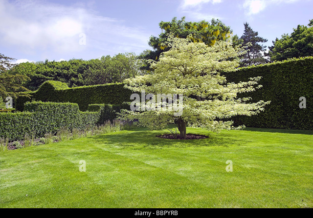 the wedding cake tree dogwood grass stock photos amp dogwood grass stock images 20916