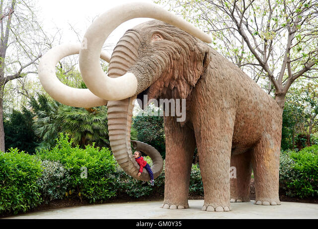Mammut trees stock photos mammut trees stock images alamy for Elephant barcellona