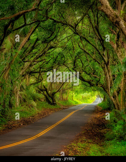 Tree covered road along the Puna Coast. Hawaii - Stock Image