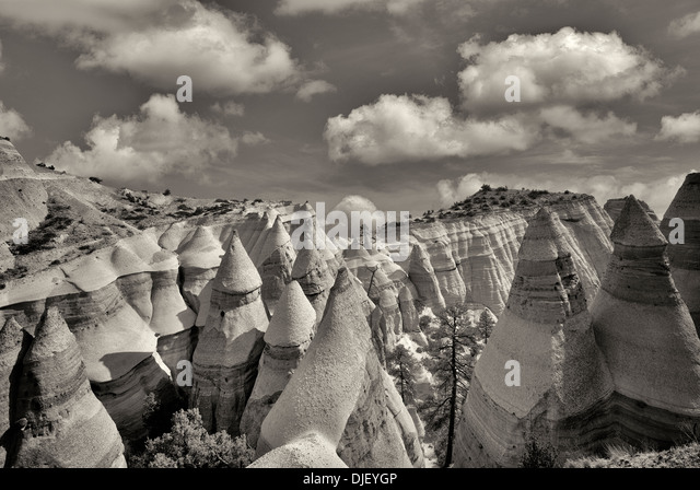 Rock formations and struggling ponderosa pine tree in Tent Rocks National Monument, New Mexico. - Stock-Bilder