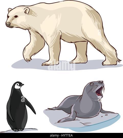 lesson 16 polar bears and penguins meet
