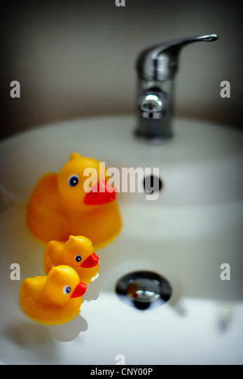 Duck and ducklings in bathroom sink - Stock Image