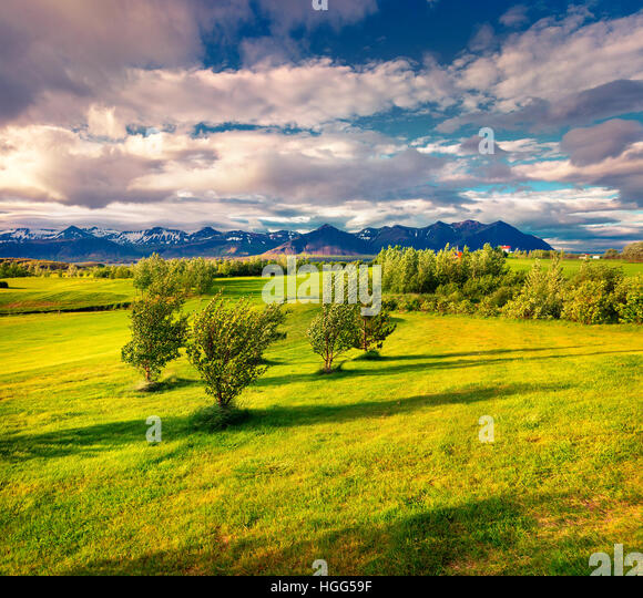 Colorful Icelandic landscape with field of green grass in the June. Sunny morning in the west coast of Iceland, - Stock Image