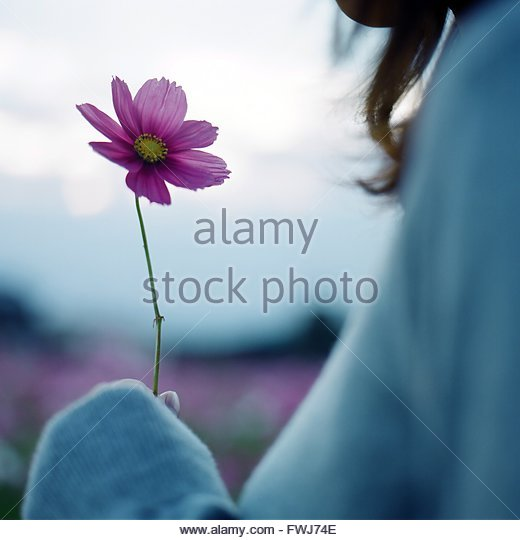 Close-Up Of Hand Holding Pink Flower - Stock Image