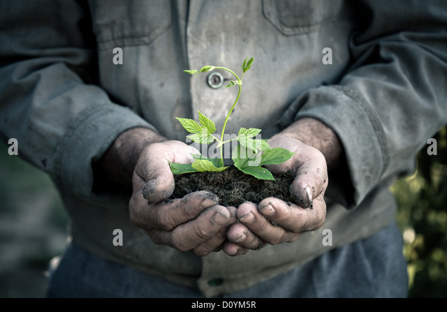 Man hands holding a green young plant - Stock Image