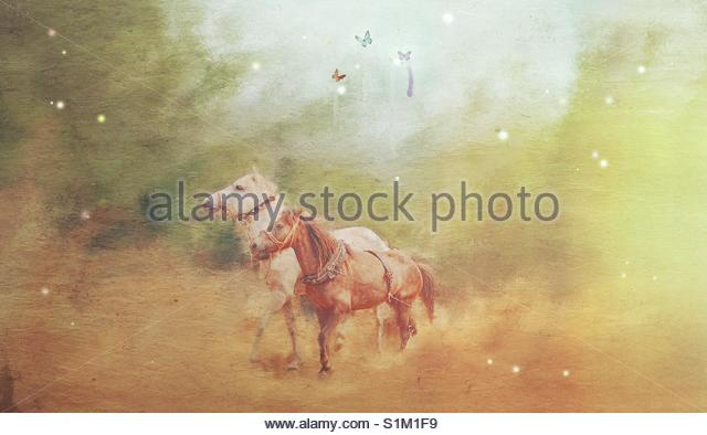 Horses' - Stock Image
