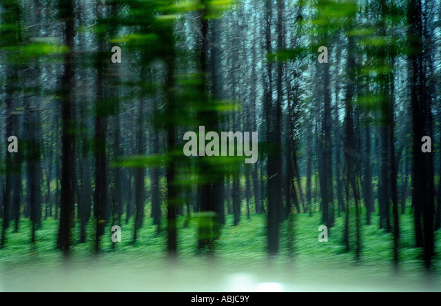 Blurred trees - Stock Image