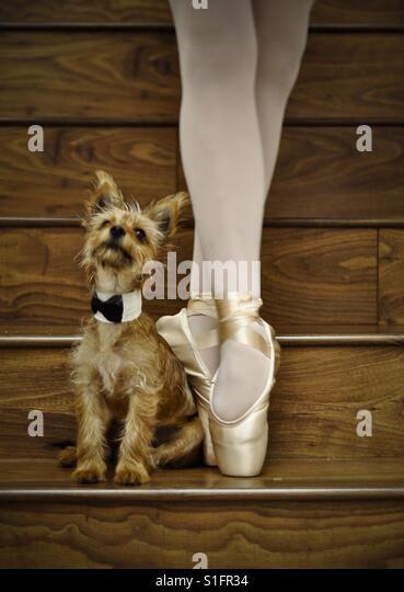 Ballerina & dog - Stock-Bilder