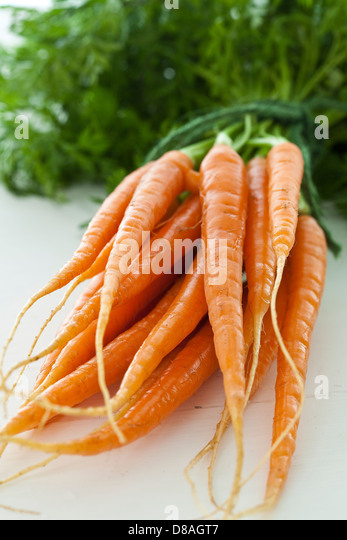 A bunch of fresh Dutch carrots with green tops still attached, tied together with green string. - Stock Image