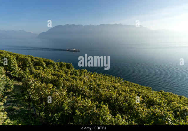 Vineyards , Lavaux region, Lake Geneva, Swiss Alps,  Switzerland - Stock Image