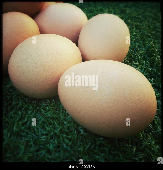 Fresh organic chicken eggs in grass - Stock Image