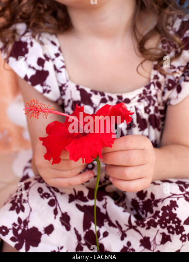detail of young girl holding a red hibiscus - Stock Image