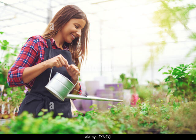 Young female nursery owner and entrepreneur watering potted plants in her greenhouse as she propagates them for - Stock Image