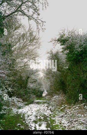 Light dusting of snow on woodland path in Cambridgeshire - Stock Image