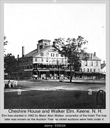 Elm black and white stock photos images alamy for Chesire house