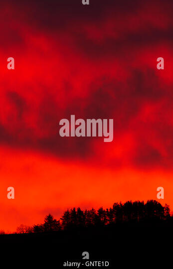 A line of trees in silhouette beneath a blazing red sky at daybreak - Stock Image