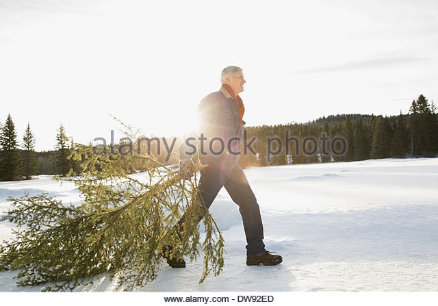 Man dragging Christmas tree in snow - Stock-Bilder