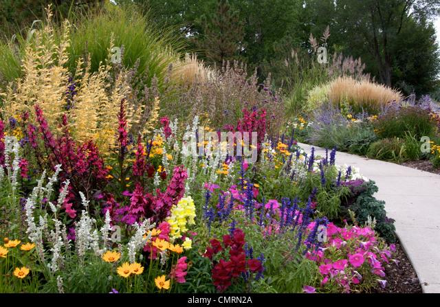 Green ornamental grasses perennials stock photos green for Colorful perennial grasses