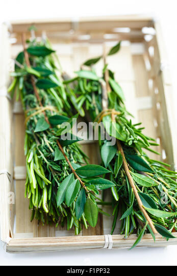 Bouquet garni in basket - Stock Image
