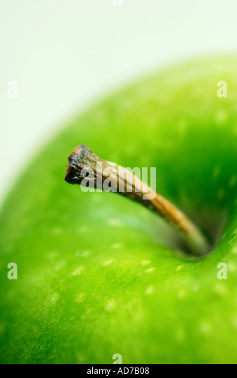closeup of green apple - Stock Image