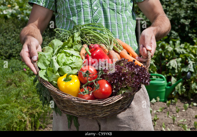 Germany, Bavaria, Altenthann, Man with basket full of vegetables - Stock Image
