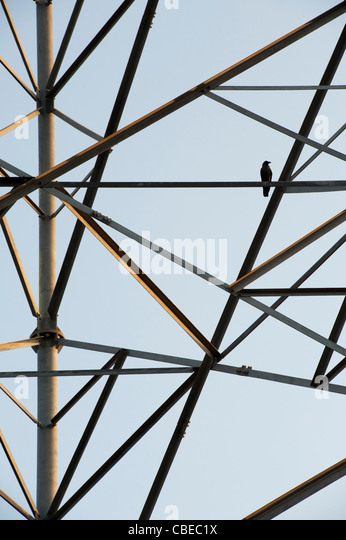 Bird sat on a Indian telecommunications tower abstract. India - Stock Image