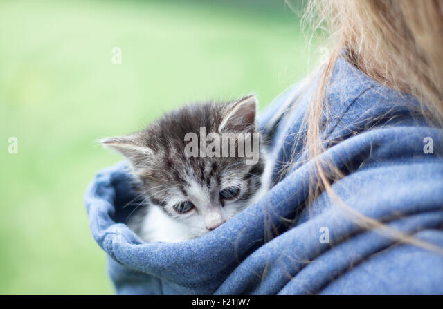 a vertical view of a tiny sad cat in a hood - Stock-Bilder