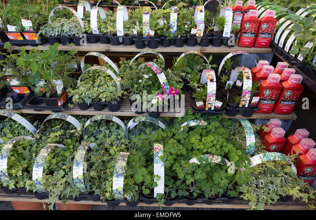 Kgf l stock photos kgf l stock images alamy for Typical landscaping plants