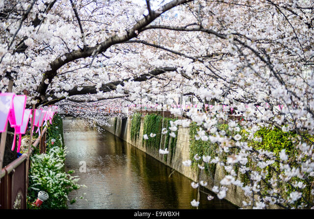 Tokyo, Japan at the Meguro Canal during the spring cherry blossom festival. - Stock-Bilder
