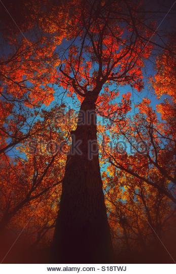 Fiery fall - Stock-Bilder