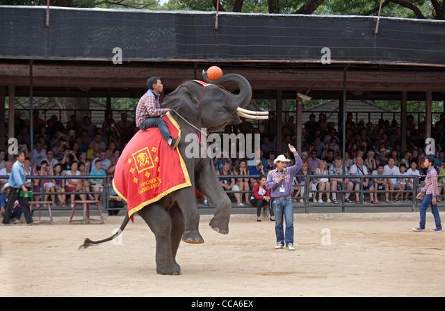 Elephant show at Thailand zoo - Stock-Bilder