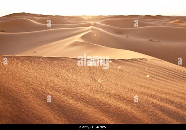 hight desert dunes in the Sahara - Stock Image