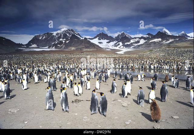 ADVENTURES OF THE PENGUIN KING  2013 Cinedigm film - Stock Image