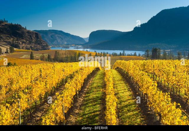 Blue Mountain Vineyard in fall, Okanagan Falls, Okanagan Valley, British Columbia, Canada - Stock-Bilder