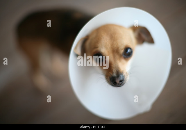 What Is A Hood Collar Or Cone For Dogs