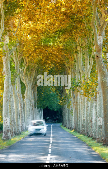 France Languedoc Roussillon car driving along tree lined road - Stock Image