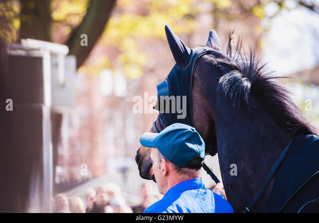 rider before horse racing circuit competition - Stock Image